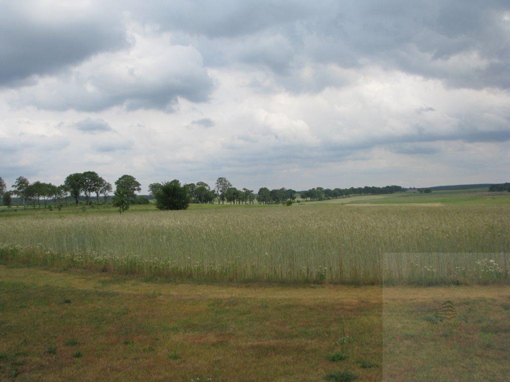 Działka siedliskowa na sprzedaż Długołęka  132000m2 Foto 1