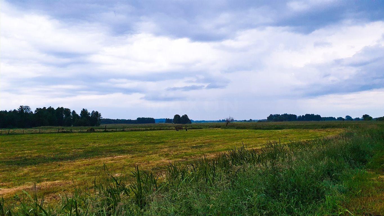 Działka siedliskowa na sprzedaż Grzegorze  14000m2 Foto 13