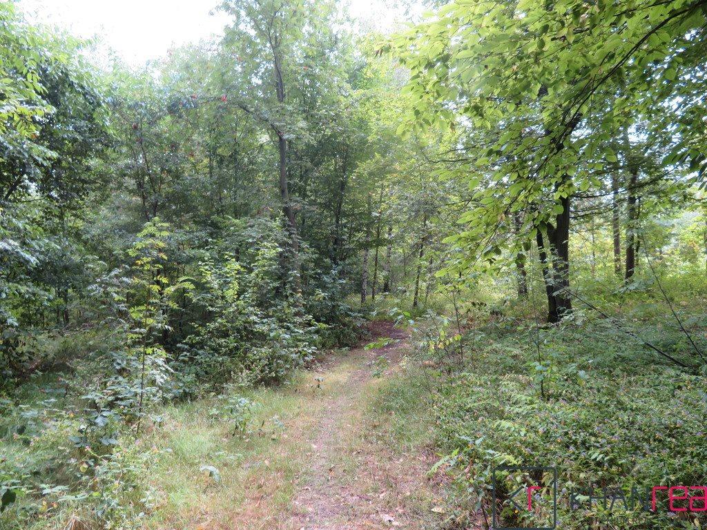Działka leśna na sprzedaż Sobików  1200m2 Foto 5