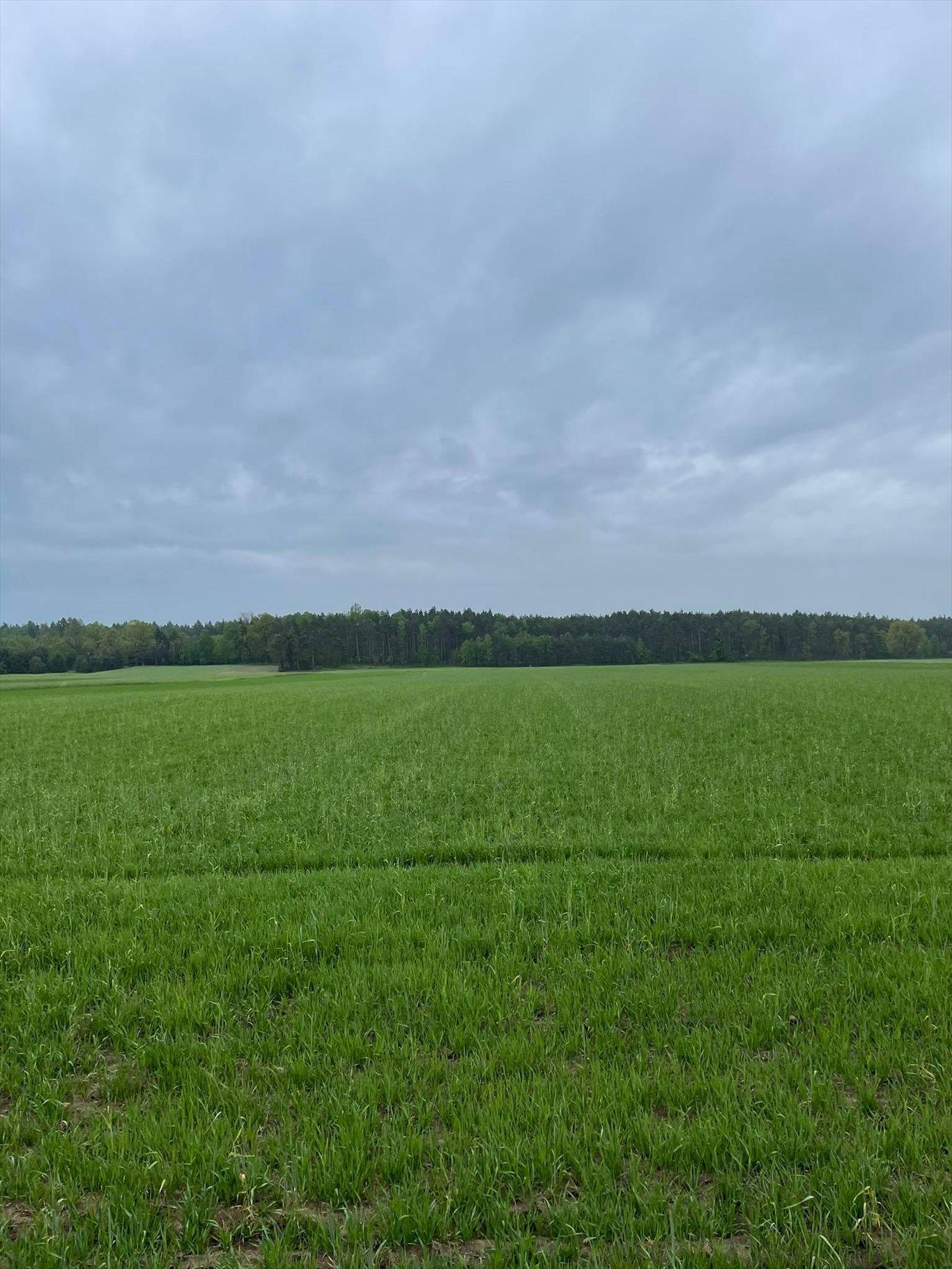 Działka gospodarstwo rolne na sprzedaż Przystajń, Ługi Radły, Kościelna 29a  60000m2 Foto 2