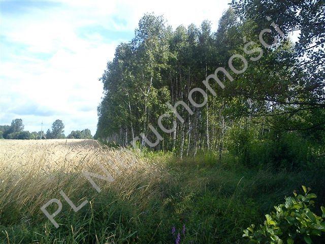 Działka rolna na sprzedaż Stanisławów  18000m2 Foto 6