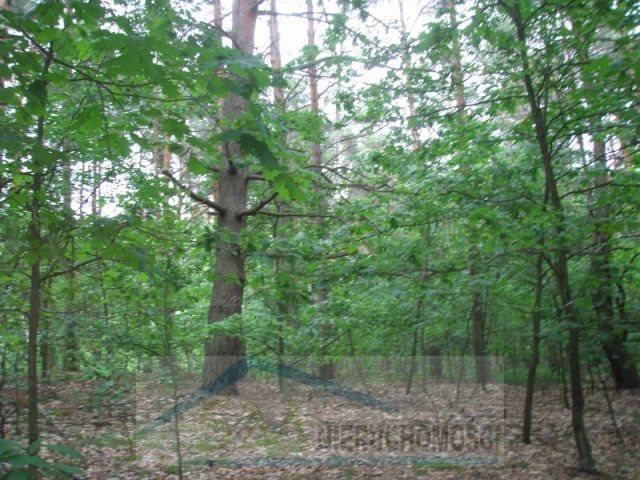Działka leśna na sprzedaż Warszawa, Wawer  2100m2 Foto 1