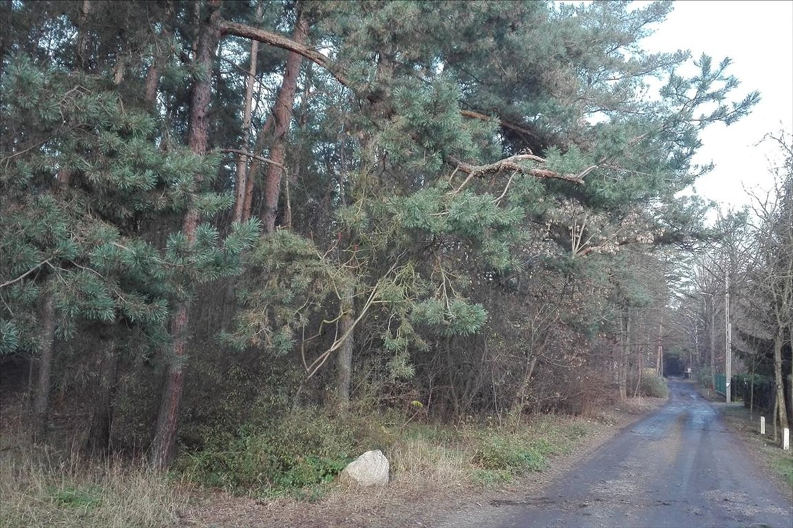 Działka leśna z prawem budowy na sprzedaż Piaseczno  2000m2 Foto 5
