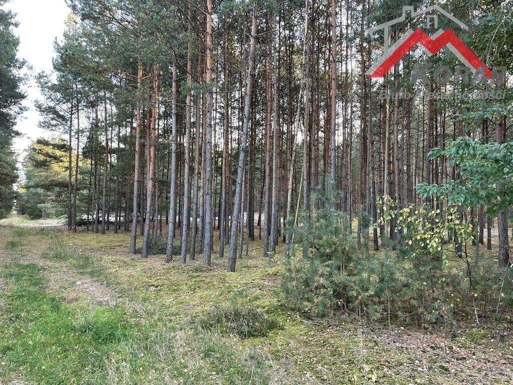Działka leśna na sprzedaż Sowia Wola  3125m2 Foto 2