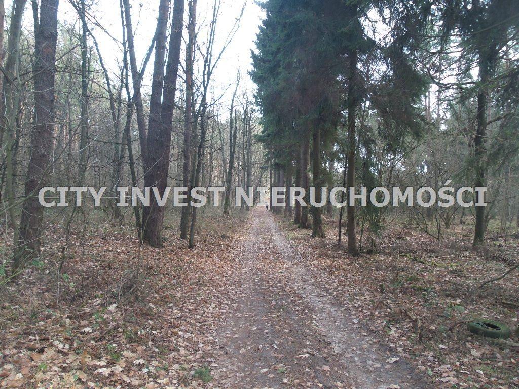 Działka leśna na sprzedaż Zielona Góra, Ochla  6650m2 Foto 1