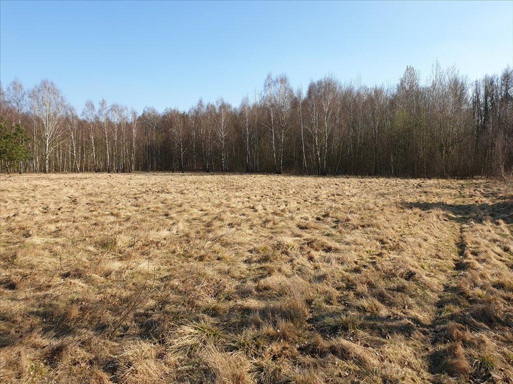 Działka rekreacyjna na sprzedaż Natolin, Nowosolna  4718m2 Foto 7
