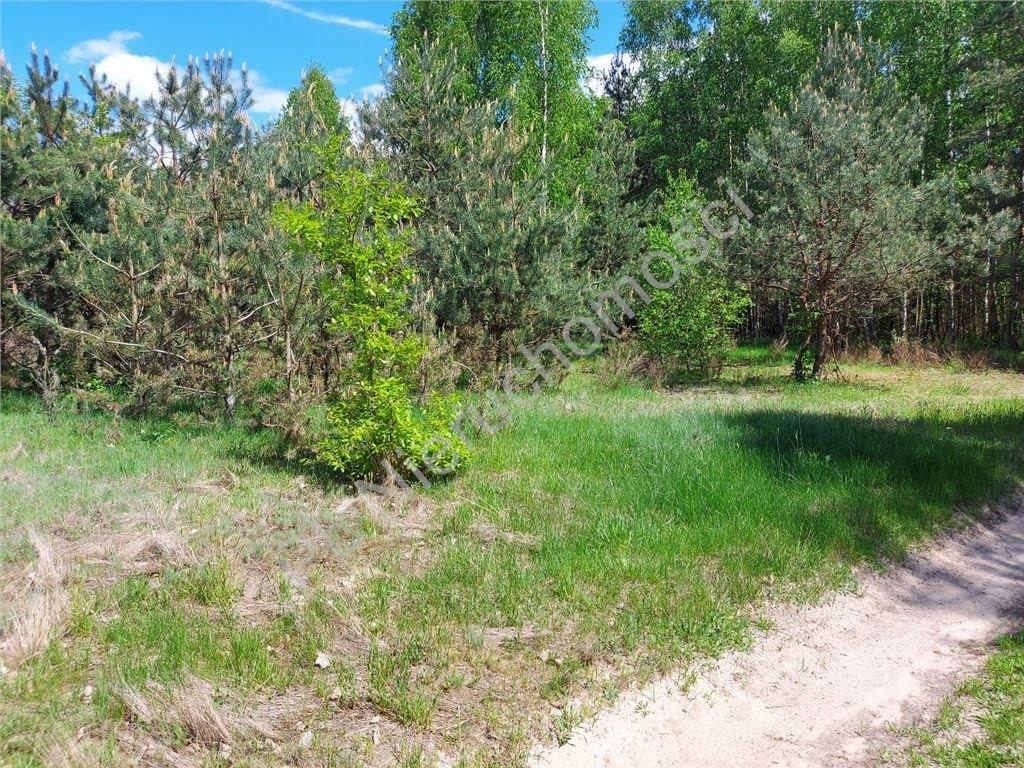 Działka rolna na sprzedaż Stare Groszki  15000m2 Foto 7