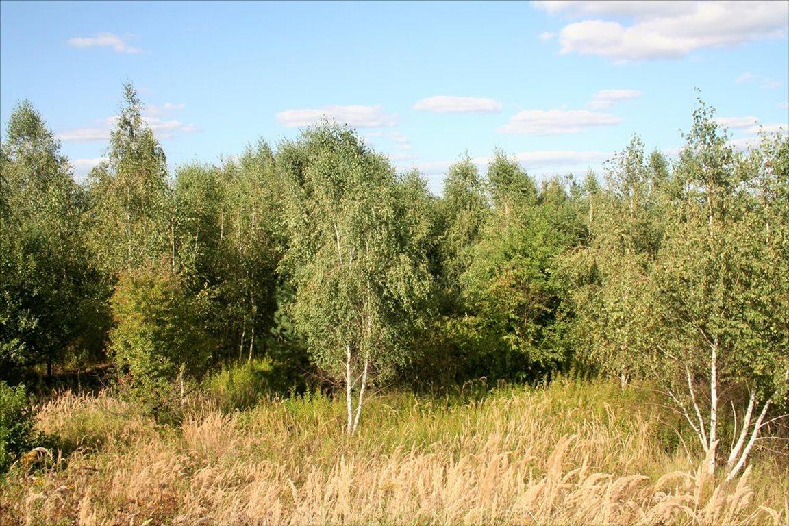 Działka rolna na sprzedaż Wilkszyn, Miękinia  2396m2 Foto 3