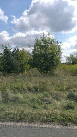 Działka rolna na sprzedaż Łoś  1000m2 Foto 1