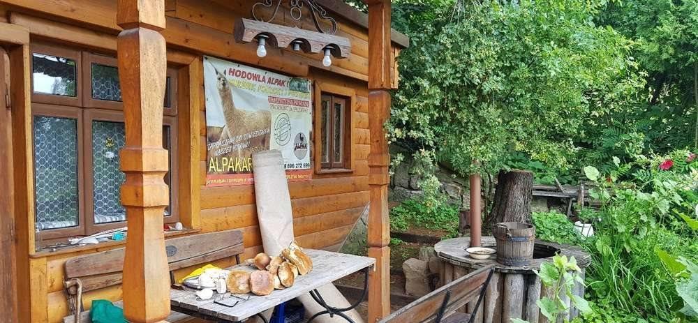 Lokal użytkowy na sprzedaż Odrzykoń  255m2 Foto 7
