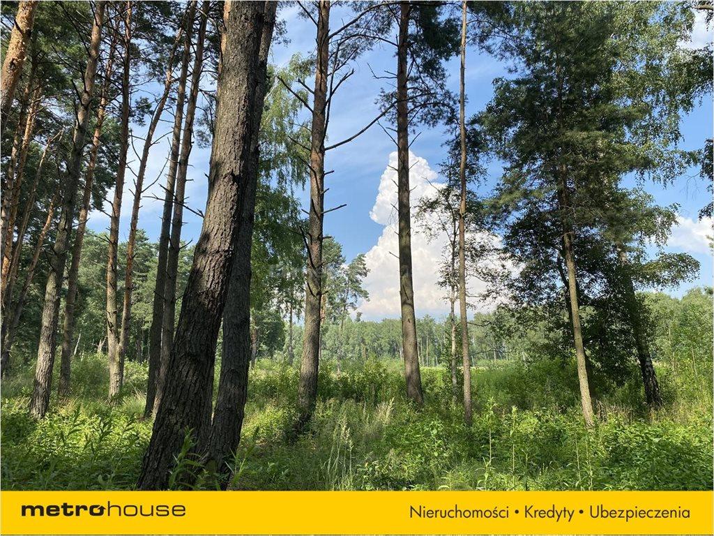 Działka leśna na sprzedaż Władysławów, Lesznowola  3128m2 Foto 6
