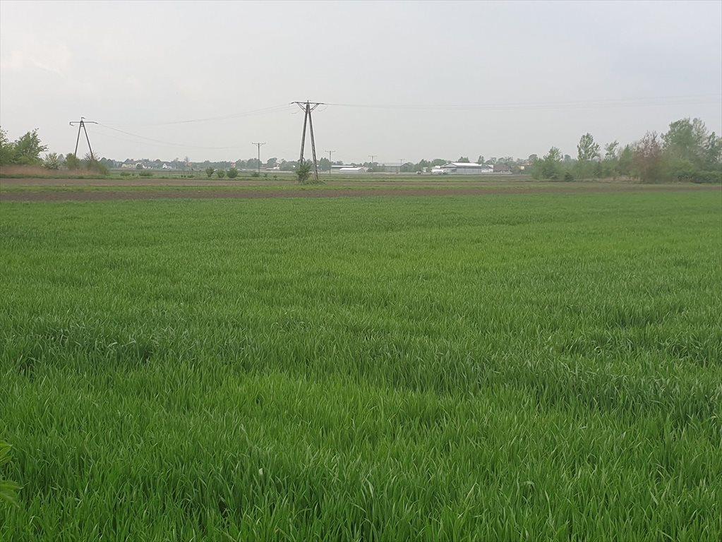 Działka rolna na sprzedaż Topolin  3000m2 Foto 5