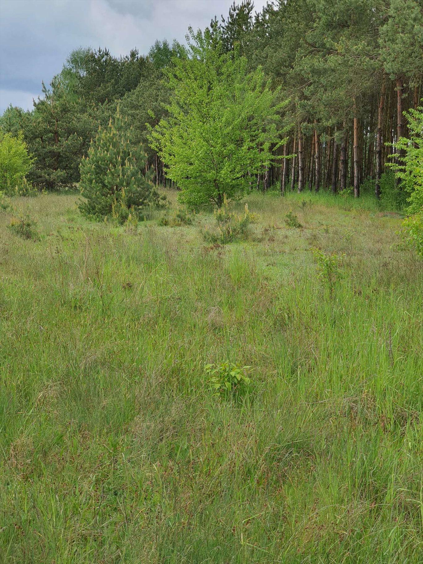 Działka rolna na sprzedaż Warszówka  12200m2 Foto 9