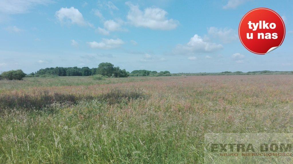 Działka rolna na sprzedaż Bochlin  320000m2 Foto 3