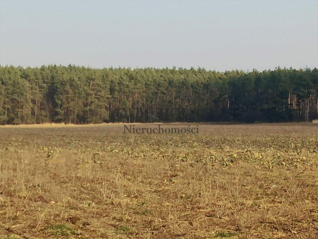 Działka budowlana na sprzedaż Miłoszyce, Asnyka  1231m2 Foto 2