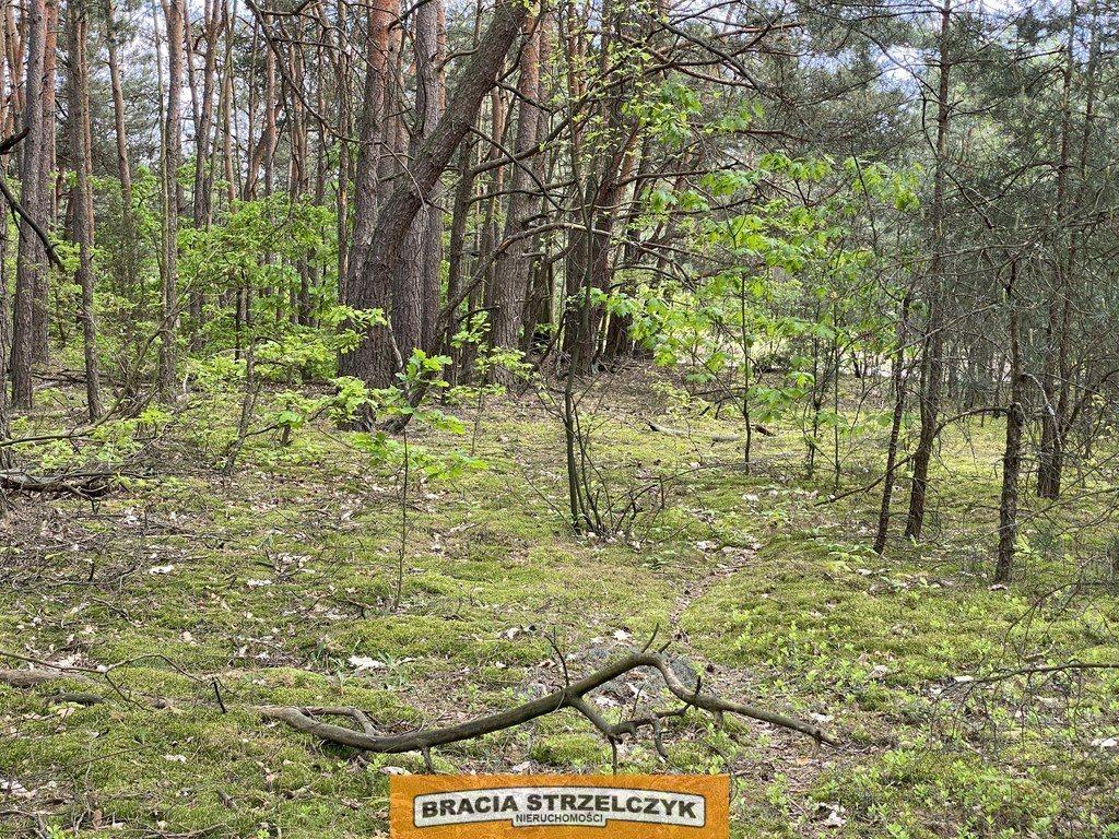 Działka leśna na sprzedaż Wólka Mlęcka  2800m2 Foto 7