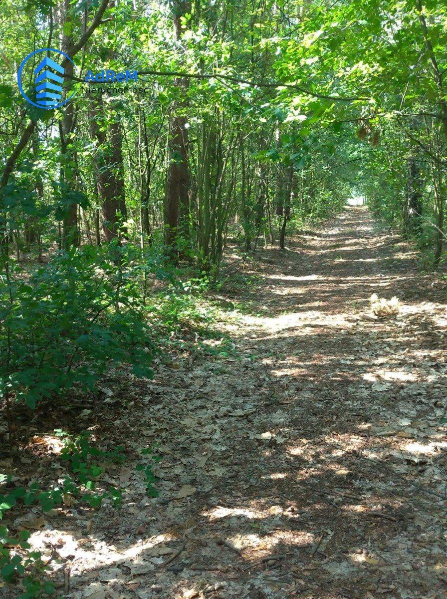 Działka leśna na sprzedaż Bogatki, Azalii  4800m2 Foto 1