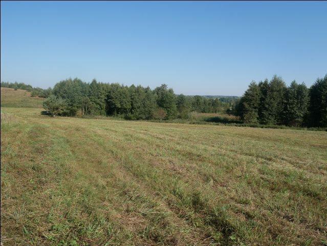 Działka rolna na sprzedaż Skolity  97248m2 Foto 4