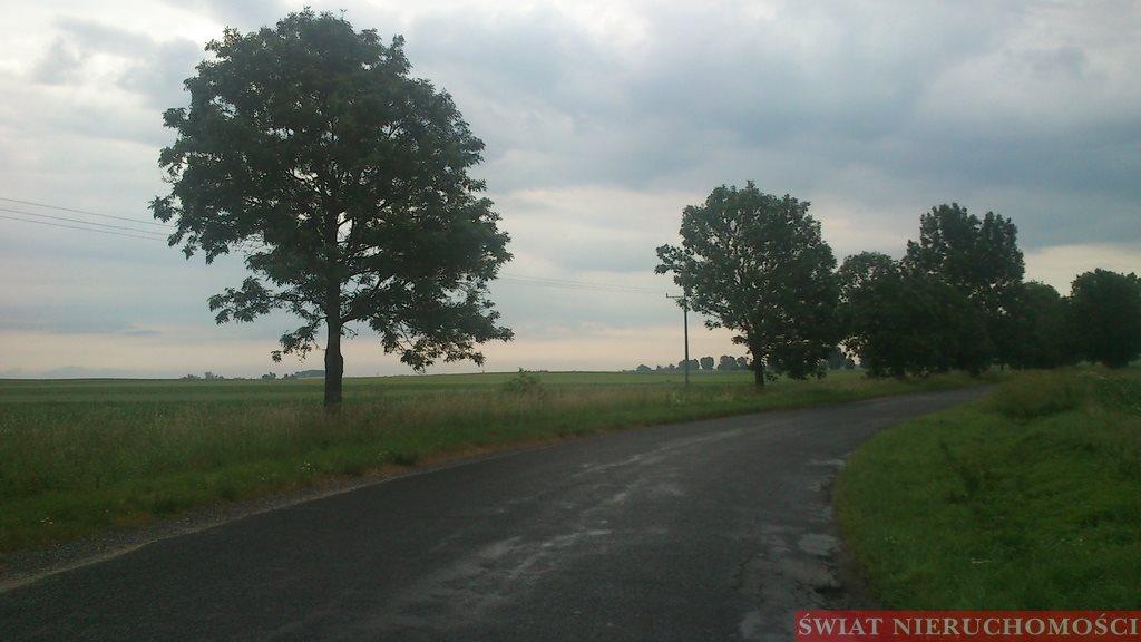 Działka rolna na sprzedaż Piotrowice  7800m2 Foto 3