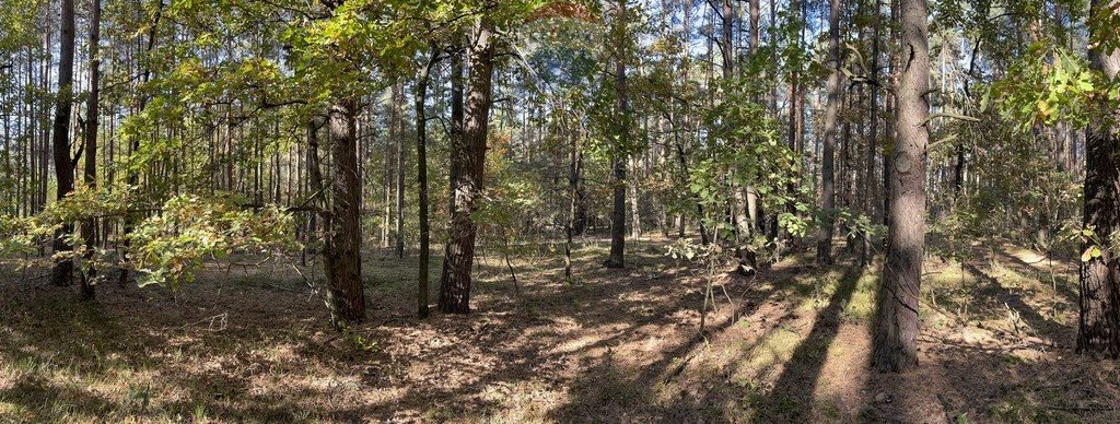Działka leśna z prawem budowy na sprzedaż Czarnówka  15000m2 Foto 9