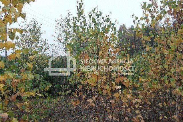 Działka leśna na sprzedaż Drozdowo  93200m2 Foto 11