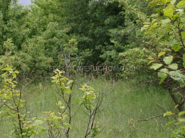Działka komercyjna na sprzedaż Milanówek, Polesie  1500m2 Foto 1