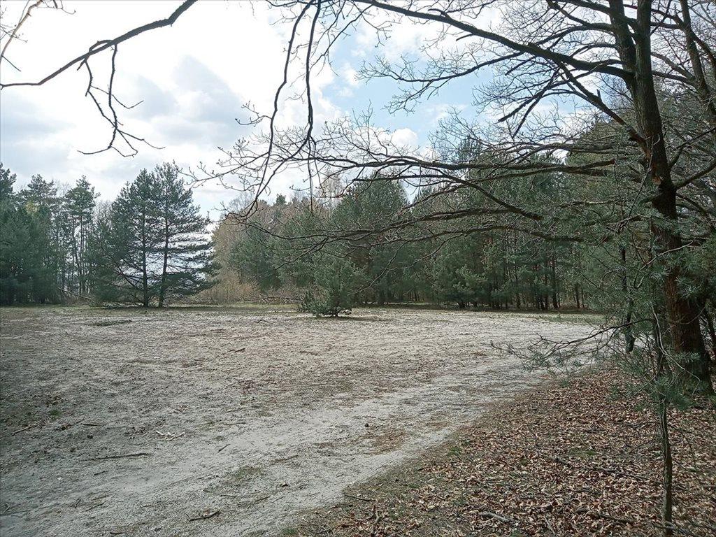 Działka rolna na sprzedaż Wola Karczewska, Wiązowna  6000m2 Foto 9