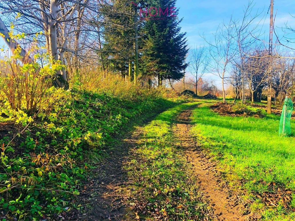 Działka leśna na sprzedaż Siedleczka  10150m2 Foto 6
