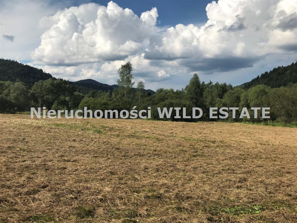 Działka rolna na sprzedaż Krzywe  3094m2 Foto 1