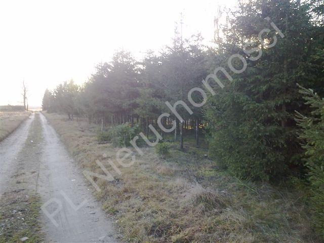 Działka rolna na sprzedaż Grzegorzewice  8000m2 Foto 4