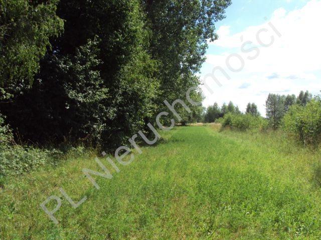 Działka rolna na sprzedaż Holendry Baranowskie  4000m2 Foto 6