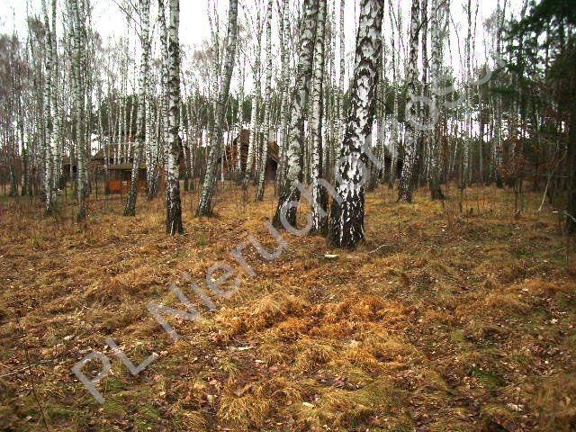 Działka leśna na sprzedaż Lesznowola  1918m2 Foto 5