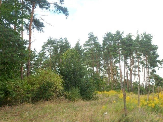 Działka budowlana na sprzedaż Poznań, Naramowice, Naramowice, Cytrynowa  718m2 Foto 2