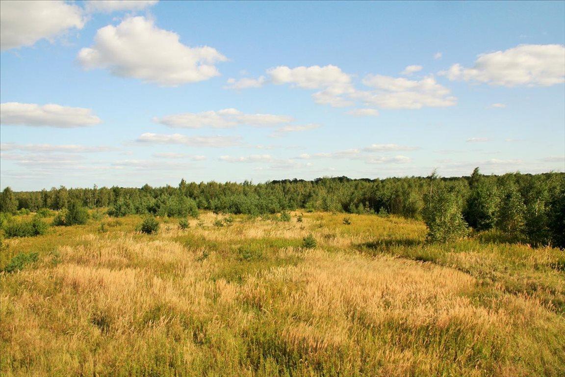 Działka rolna na sprzedaż Wilkszyn, Miękinia  2396m2 Foto 1