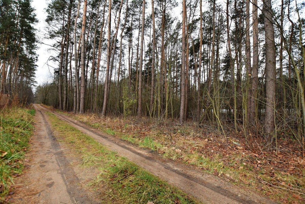 Działka leśna z prawem budowy na sprzedaż Zofiówka  1400m2 Foto 2