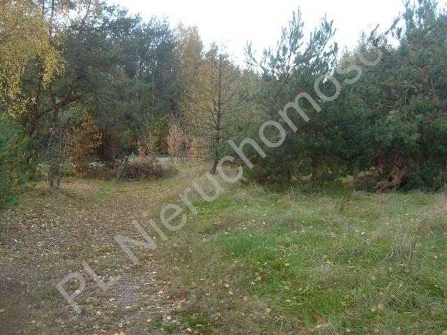 Działka rolna na sprzedaż Stare Budy  3500m2 Foto 3