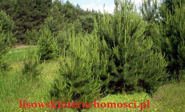 Działka leśna na sprzedaż Parzęczew  21722m2 Foto 1