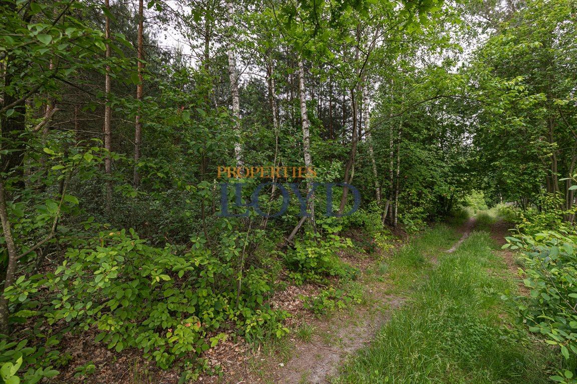 Działka rolna na sprzedaż Kociołki, Kociołki  3229m2 Foto 6