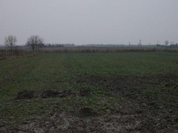 Działka rolna na sprzedaż Sicienko  20000m2 Foto 2
