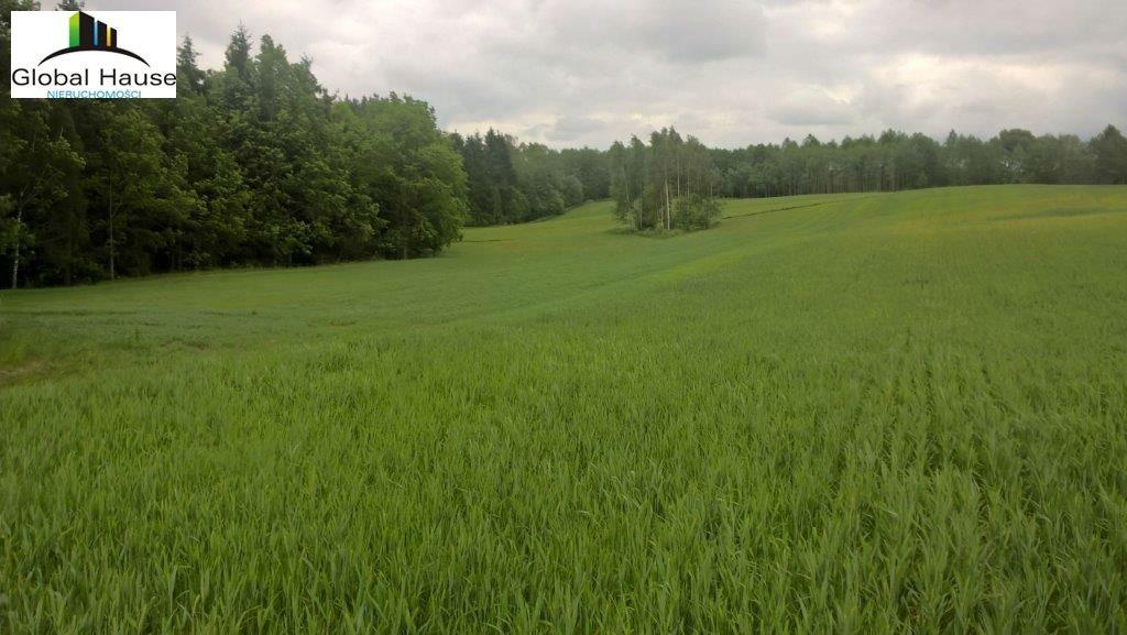 Działka rolna na sprzedaż Nowe Krzywe  3080m2 Foto 8