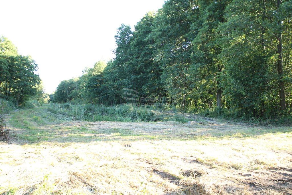 Działka leśna na sprzedaż Daniszewo  7000m2 Foto 2
