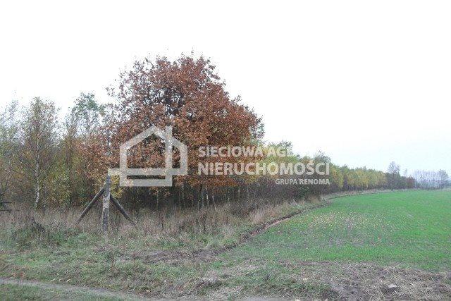 Działka leśna na sprzedaż Stare Gronowo  49000m2 Foto 1
