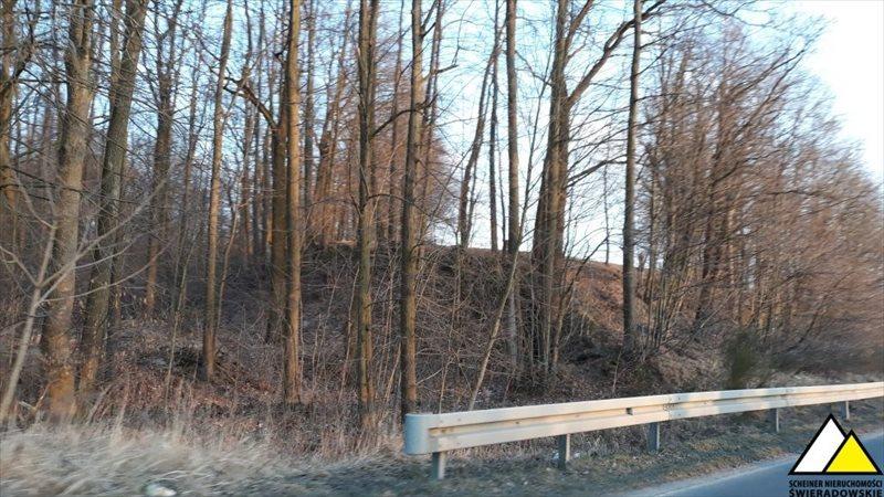 Działka leśna na sprzedaż Kościelniki Górne, Pogórze Izerskie  4800m2 Foto 3
