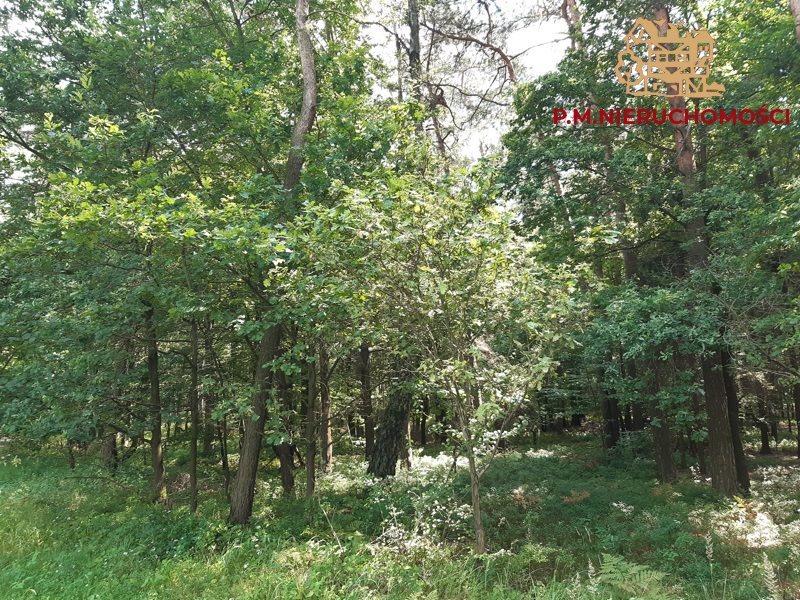 Działka leśna na sprzedaż Rybnik, Ochojec  4600m2 Foto 1