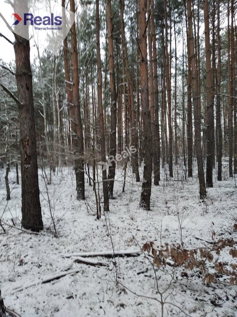 Działka leśna z prawem budowy na sprzedaż Warszawa, Wawer, Anin  3734m2 Foto 4