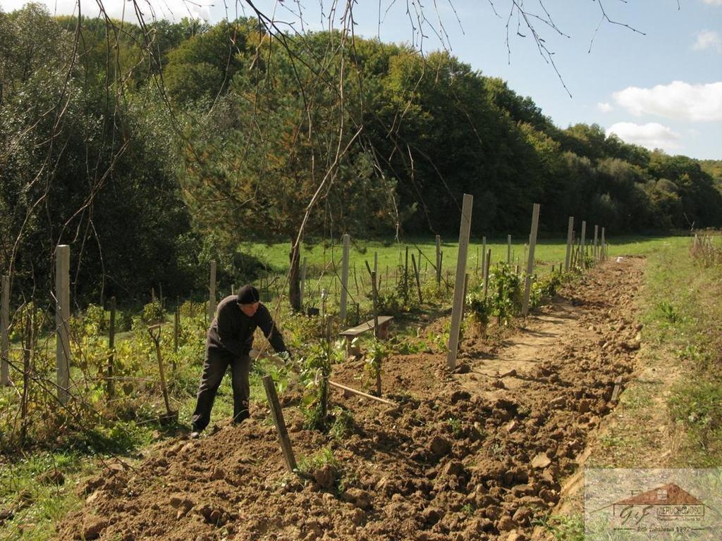 Działka rolna na sprzedaż Węgierka  11700m2 Foto 11