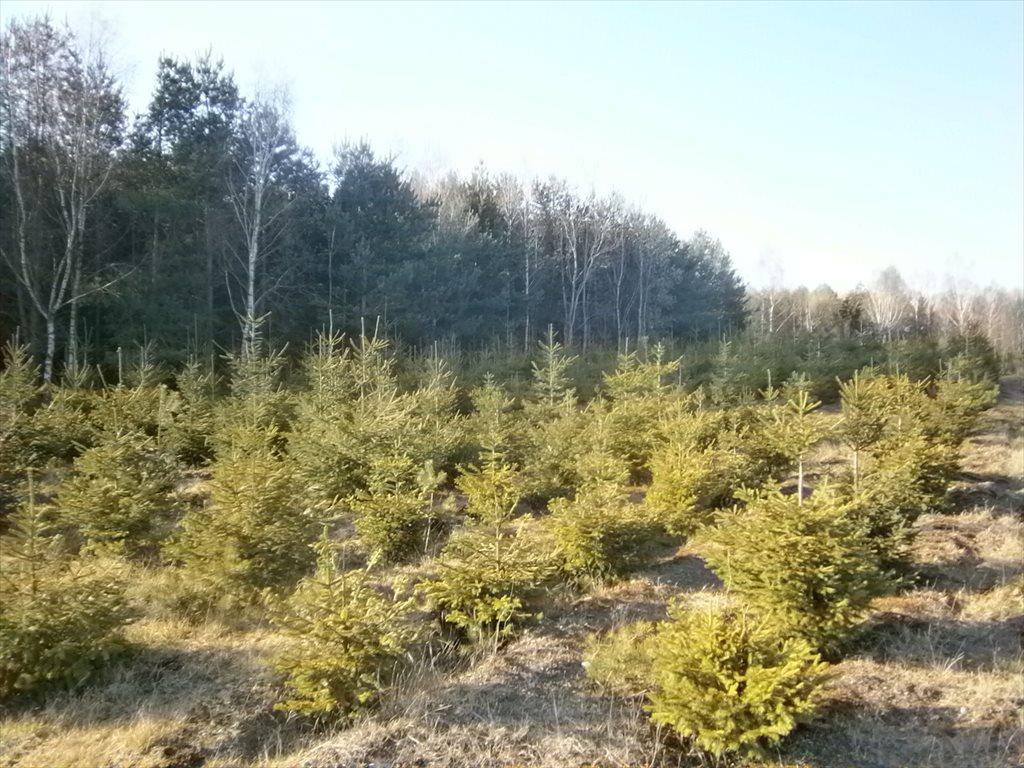 Działka leśna na sprzedaż Stara Wiśniewka  55661m2 Foto 13