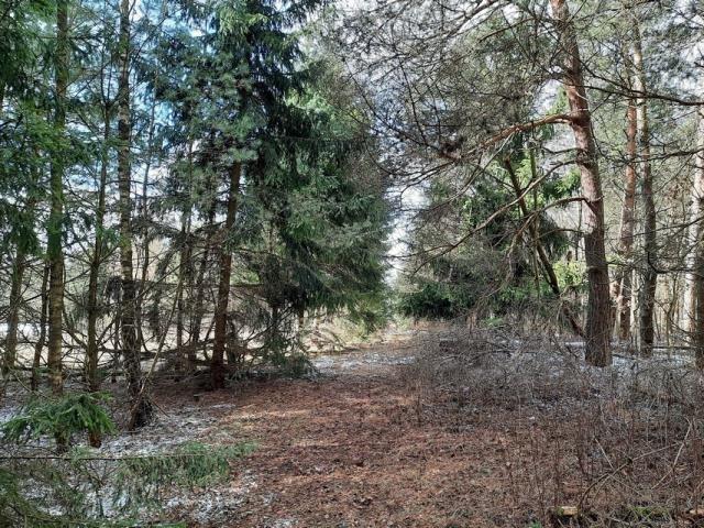 Działka leśna na sprzedaż Grądzkie  1404m2 Foto 4