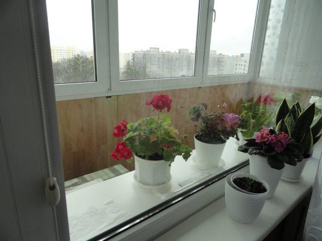 Mieszkanie trzypokojowe na sprzedaż Elbląg, Andersa  61m2 Foto 3