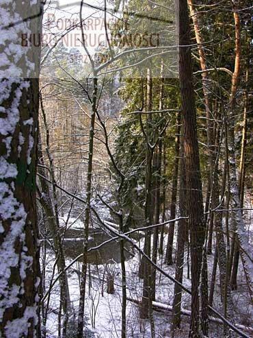 Działka leśna na sprzedaż Nawsie  2500m2 Foto 1